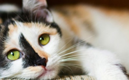 The social media app using cats for privacy